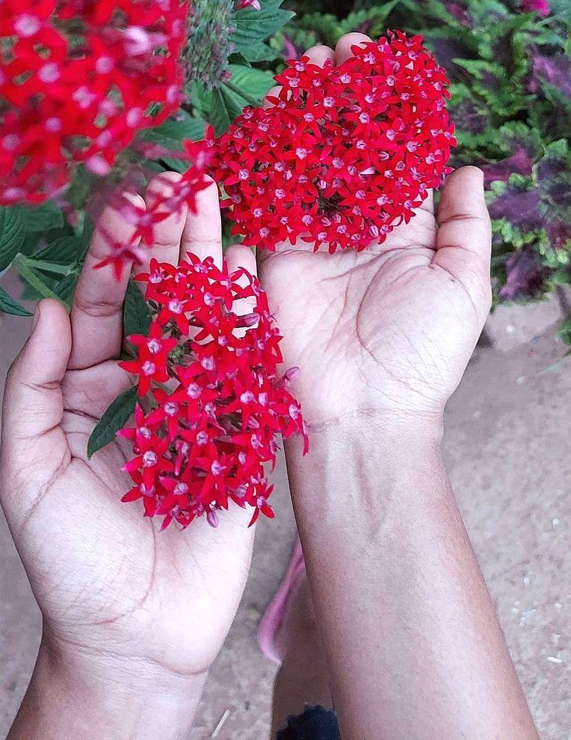 40 Самых неприхотливых растений для сада
