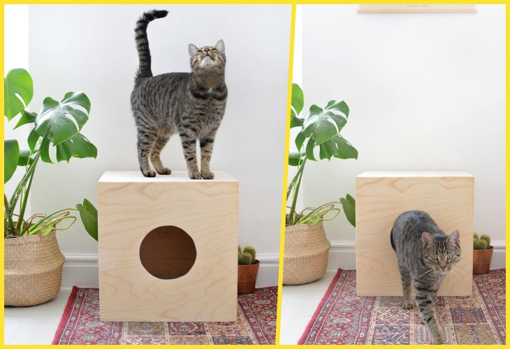 Как выбрать домик для кошки