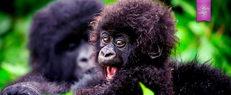 Очаровательные дети животных {60 Фото}