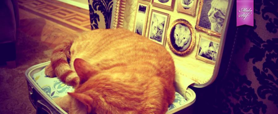 Уютный дом для кошки