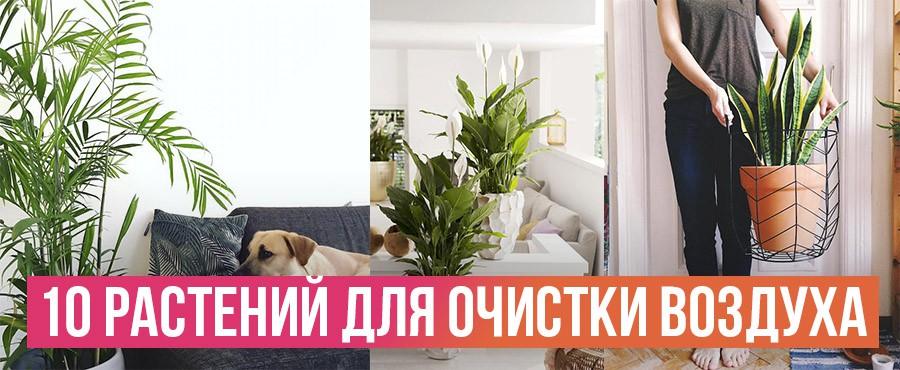 10 Лучших комнатных растений, по мнению НАСА, для очистки воздуха