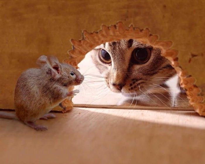 Репеллент от мышей