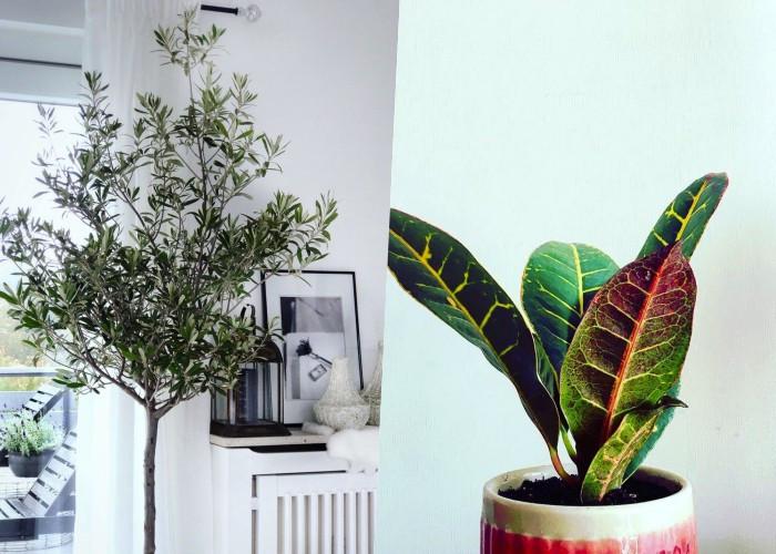 9 Огромных комнатных растений, на которые стоит обратить внимание