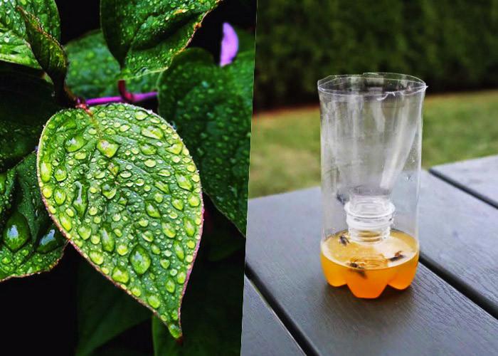9 Проверенных временем приемов как избавиться от насекомых на садовом участке