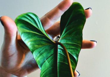 8 Советов по уходу за комнатными растениями зимой