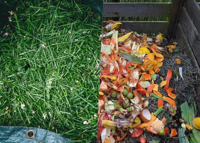 10 Секретных ингредиентов для роста растений в вашем саду