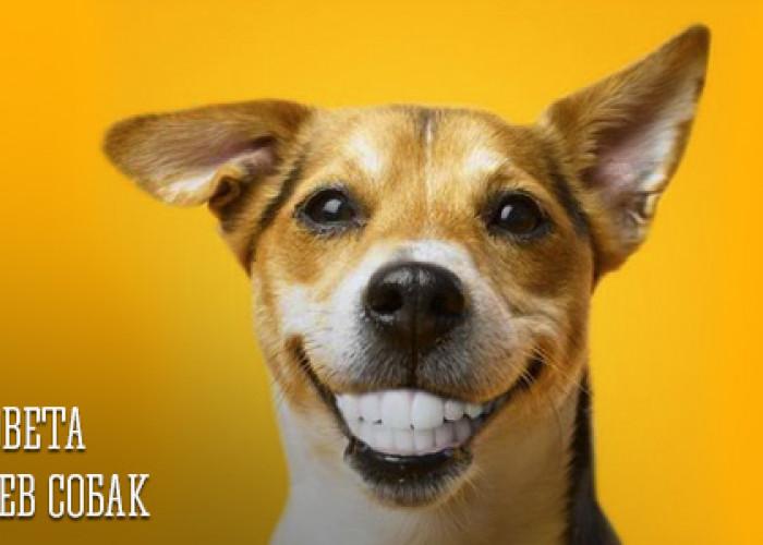 33 Блестящих совета для владельцев собак
