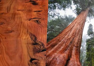 13 Видов древесины - их свойства и сфера применения